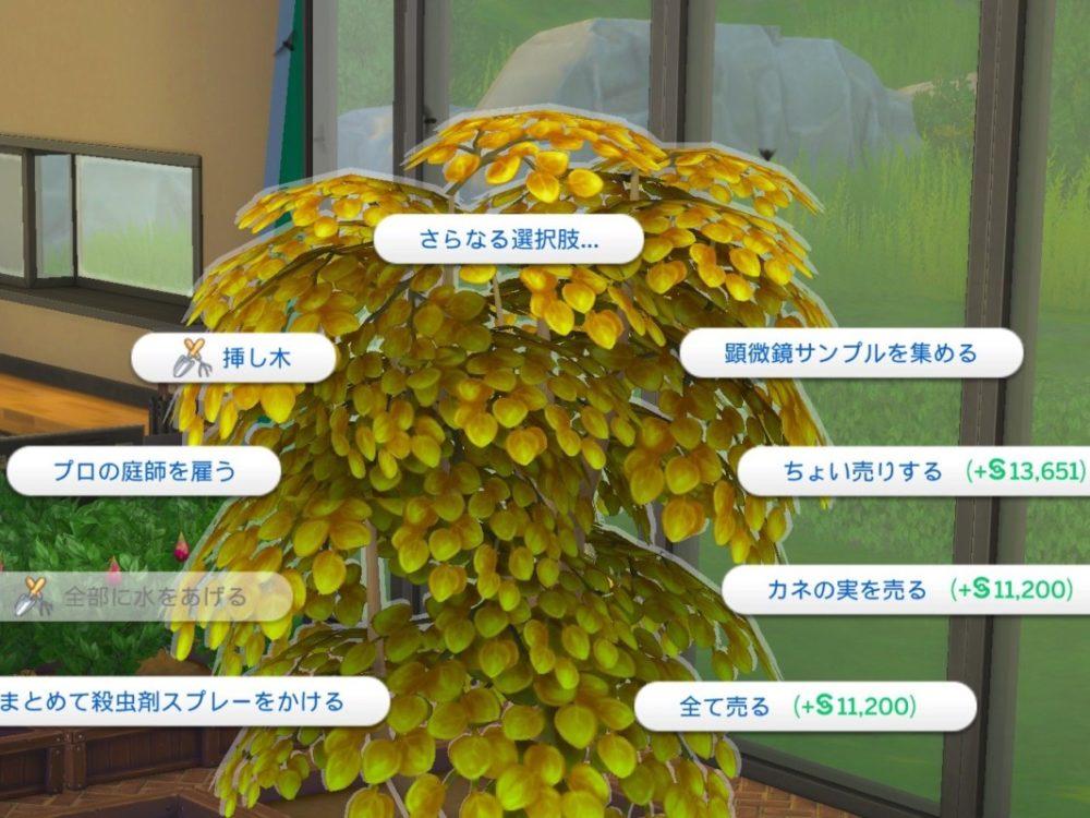 シムズ4_カネの木